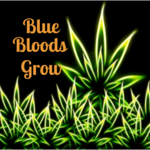 Blue Bloods Grow